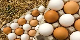 صادرات تخم مرغ و محصولات لبنی از گلپایگان