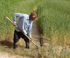 برخی کشاورزان گلپایگان تحت پوشش کمیته امداد قرار گرفتند