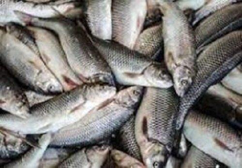 ماهیها هم به شیشه معتاد میشوند